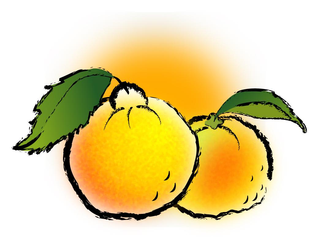 そして高知産の柚子もおいしいぞね!