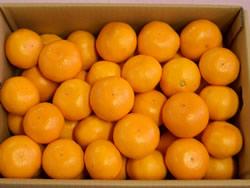 orange2005-5km1